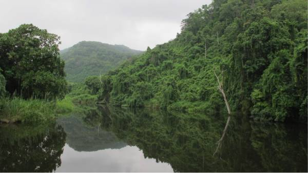 a rainforest you have probably never heard of lies in east