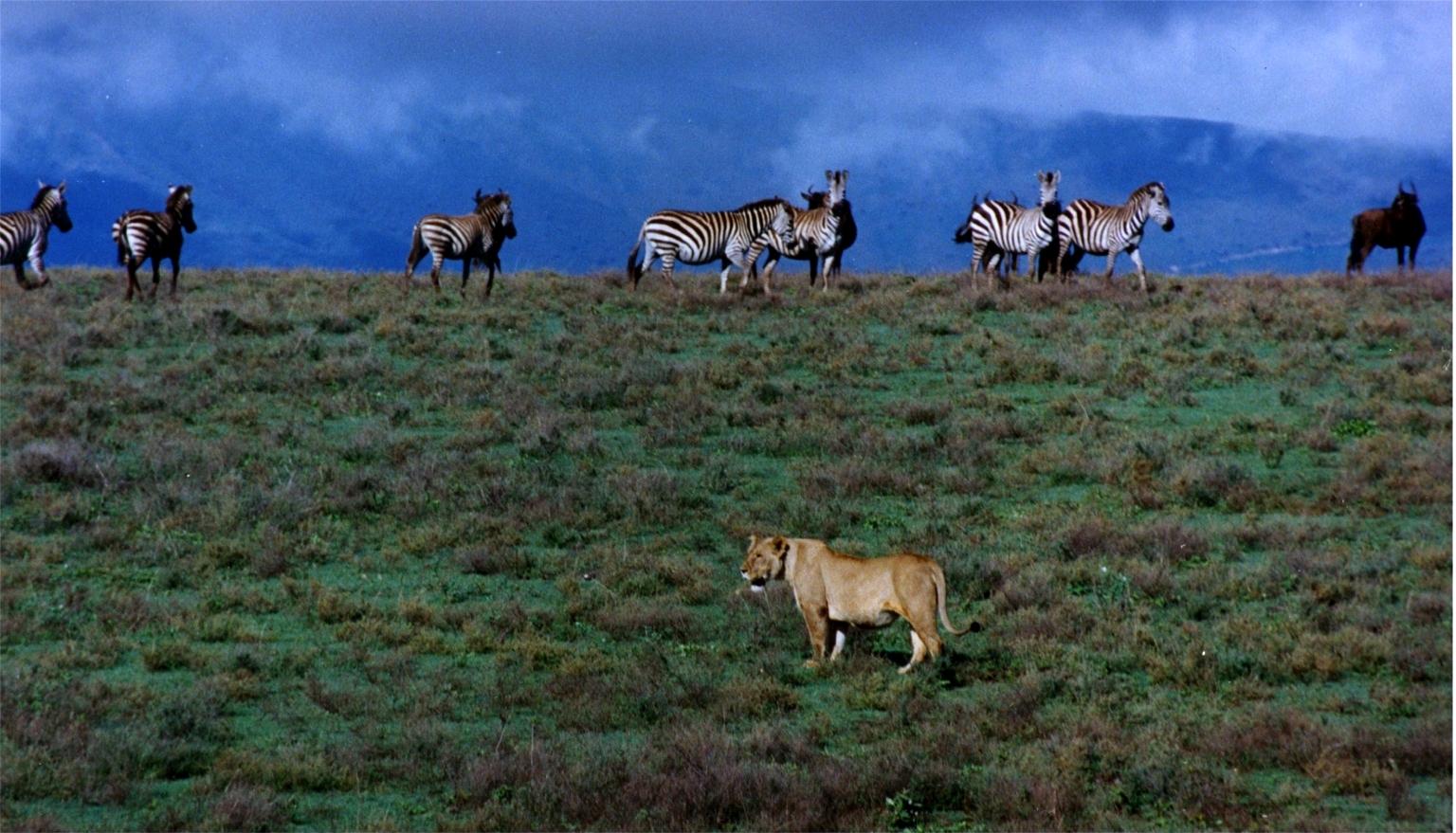 Lieux Afrique Ngorongoro
