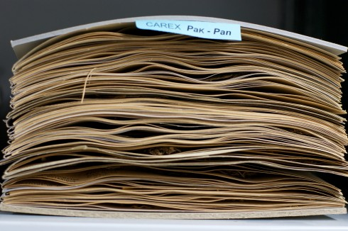 Neuchatel_Herbarium_pile_of_sample_(2)