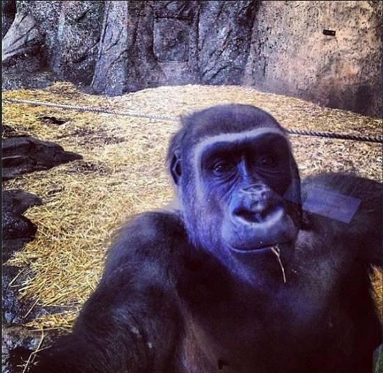 animal-selfies4