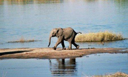 Ian_708_03_Baby_Elephant,_Chobe_River,_Botswana