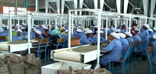 ethiopian_workers