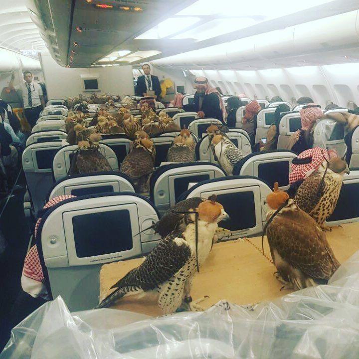 Faucon avion Prince saoudien